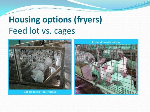 "Housing options (fryers)Feed lot vs. cages                                  Fryers at Garrett College   Rabbit ""feedlot"" i..."