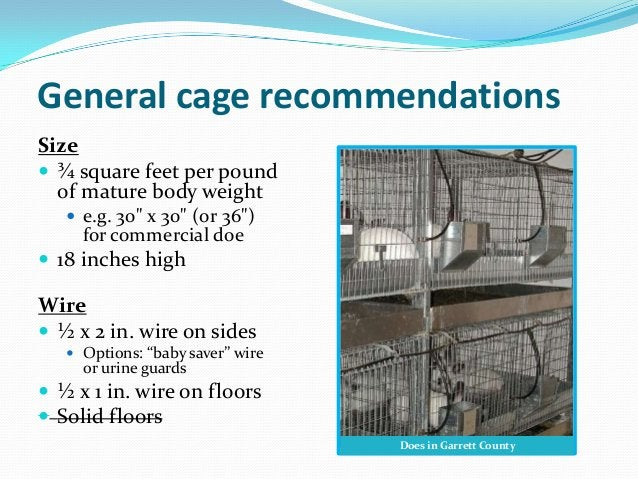 """General cage recommendationsSize ¾ square feet per pound  of mature body weight    e.g. 30"""" x 30"""" (or 36"""")     for comme..."""