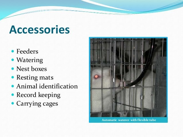 Accessories   Feeders   Watering   Nest boxes   Resting mats   Animal identification   Record keeping   Carrying ca...