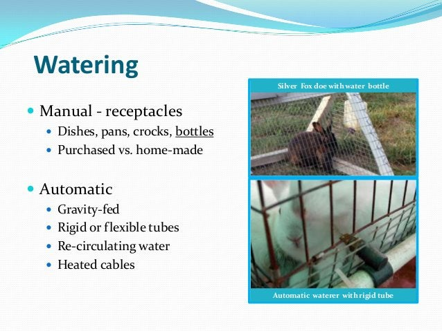 Watering                                     Silver Fox doe with water bottle Manual - receptacles   Dishes, pans, crock...