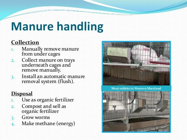Manure handlingCollection1.   Manually remove manure     from under cages2.   Collect manure on trays     underneath cages...