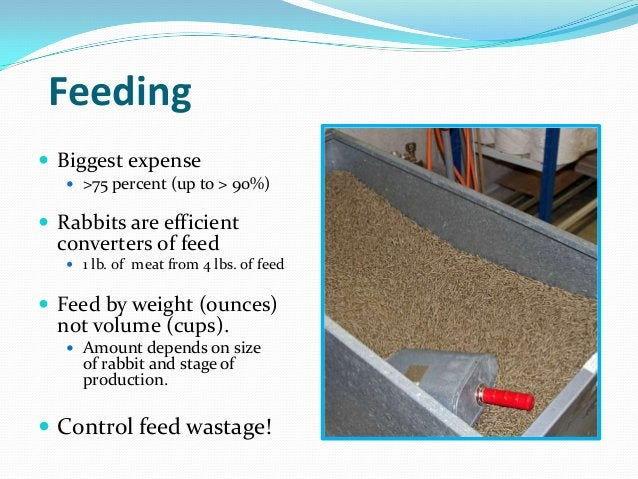 Feeding Biggest expense    >75 percent (up to > 90%) Rabbits are efficient  converters of feed    1 lb. of meat from 4...