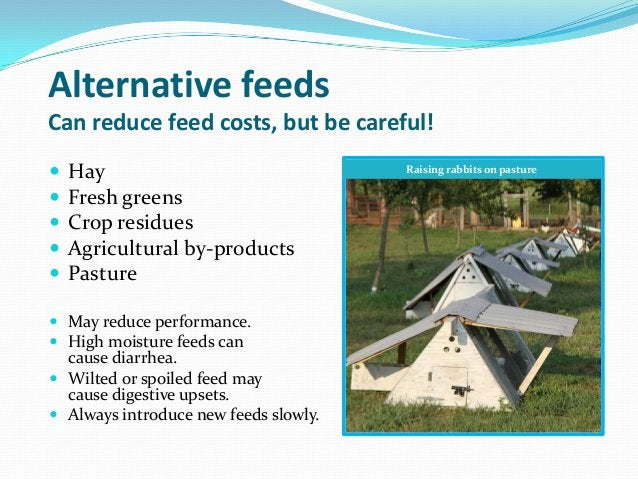 Alternative feedsCan reduce feed costs, but be careful!   Hay                                Raising rabbits on pasture ...