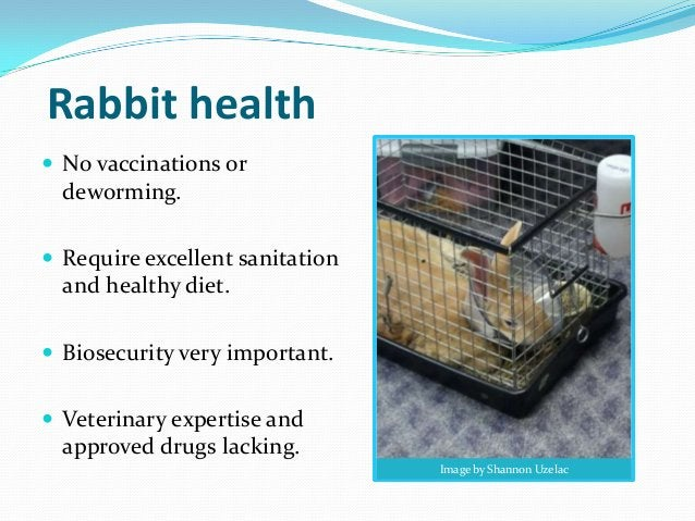 Rabbit health No vaccinations or  deworming. Require excellent sanitation  and healthy diet. Biosecurity very important...