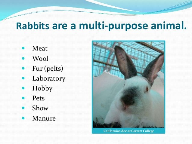 Rabbits are a multi-purpose animal.    Meat    Wool    Fur (pelts)    Laboratory    Hobby    Pets    Show    Manur...