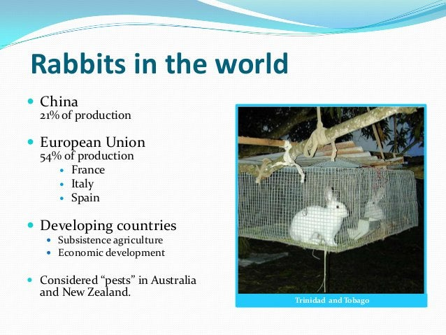 Rabbits in the world China  21% of production European Union  54% of production      France      Italy      Spain De...