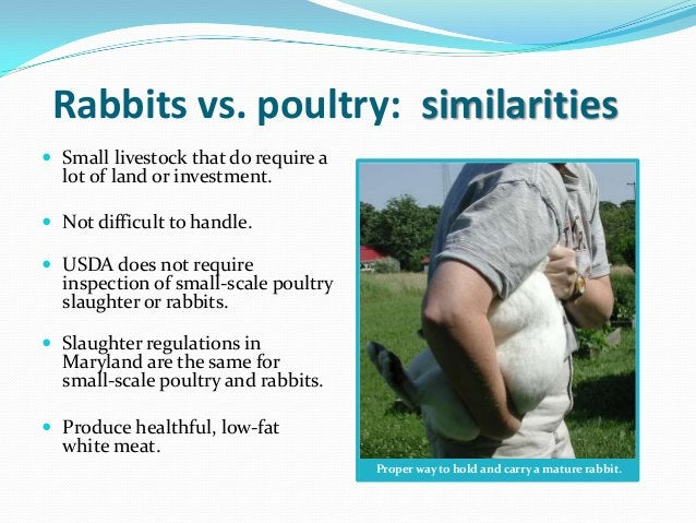 Rabbits vs. poultry: similarities Small livestock that do require a  lot of land or investment. Not difficult to handle....