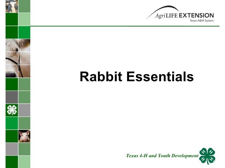 Rabbit Essentials  Texas 4-H and Youth Development