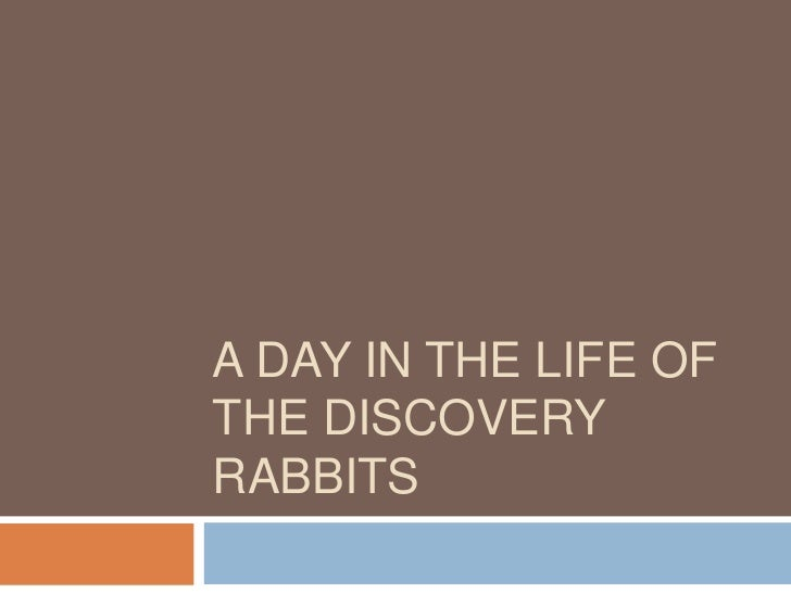 A DAY IN THE LIFE OFTHE DISCOVERYRABBITS