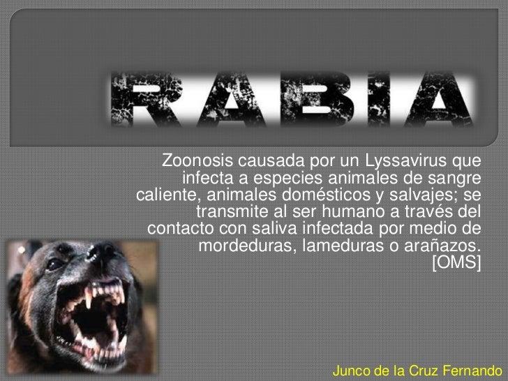 Zoonosis causada por un Lyssavirus que      infecta a especies animales de sangrecaliente, animales domésticos y salvajes;...