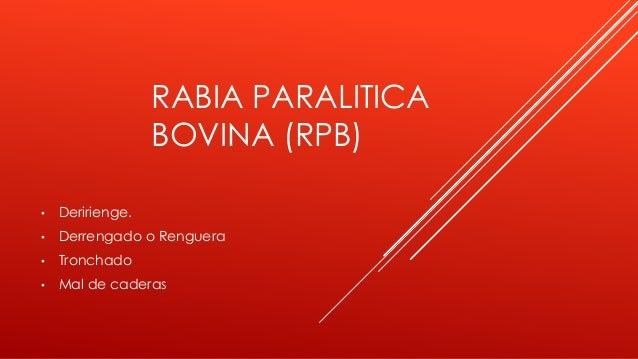 RABIA PARALITICA BOVINA (RPB) • Deririenge. • Derrengado o Renguera • Tronchado • Mal de caderas