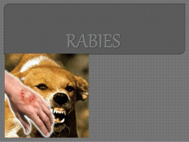 Agent factors • Lyssavirus type 1 RNA virus • Source of infection is through the saliva of a rabid animal Host factors • A...