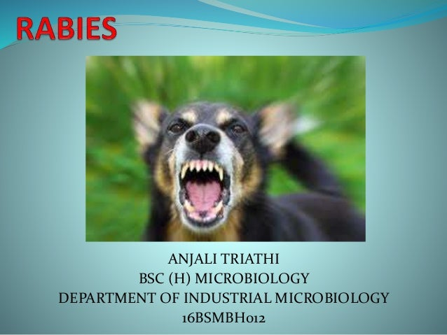 ANJALI TRIATHI BSC (H) MICROBIOLOGY DEPARTMENT OF INDUSTRIAL MICROBIOLOGY 16BSMBH012