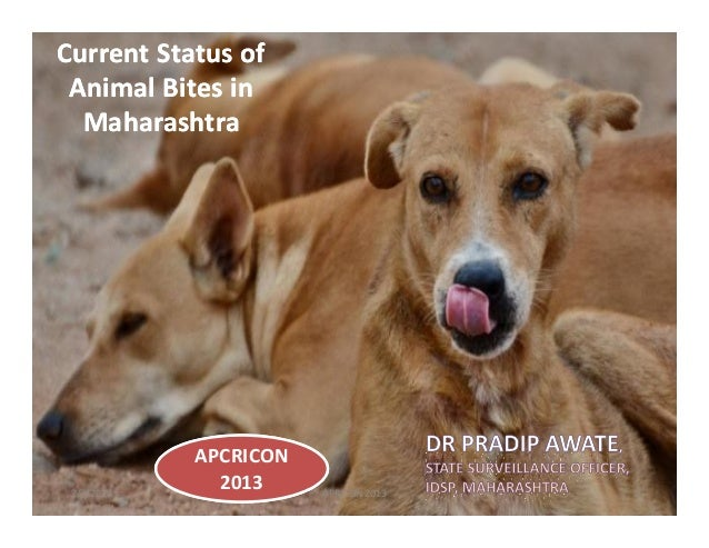 Current Status ofCurrent Status of Animal Bites inAnimal Bites in MaharashtraMaharashtra 7/7/2013 1APRICON 2013 APCRICON 2...