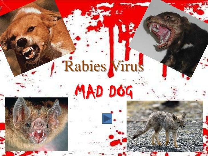 Rabies Virus  MAD DOG