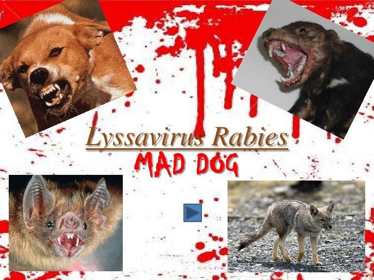 Lyssavirus Rabies     MAD DOG
