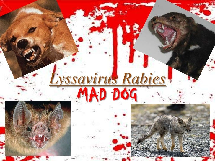 Lyssavirus Rabies     MAD DOG
