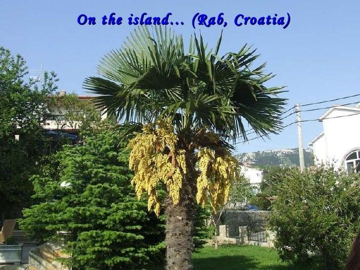 On the island… (Rab, Croatia)