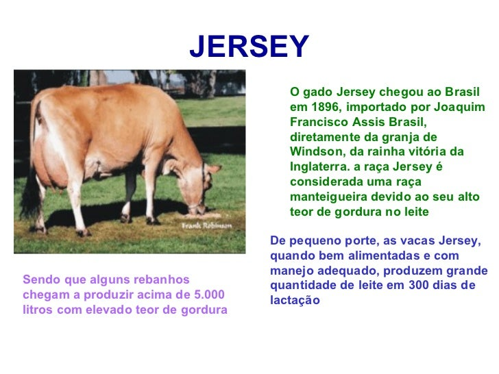 Tipos de gado de corte no brasil