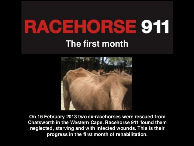 The first monthOn 16 February 2013 two ex-racehorses were rescued fromChatsworth in the Western Cape. Racehorse 911 found ...