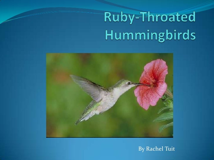 Ruby-Throated Hummingbirds<br />By Rachel Tuit<br />