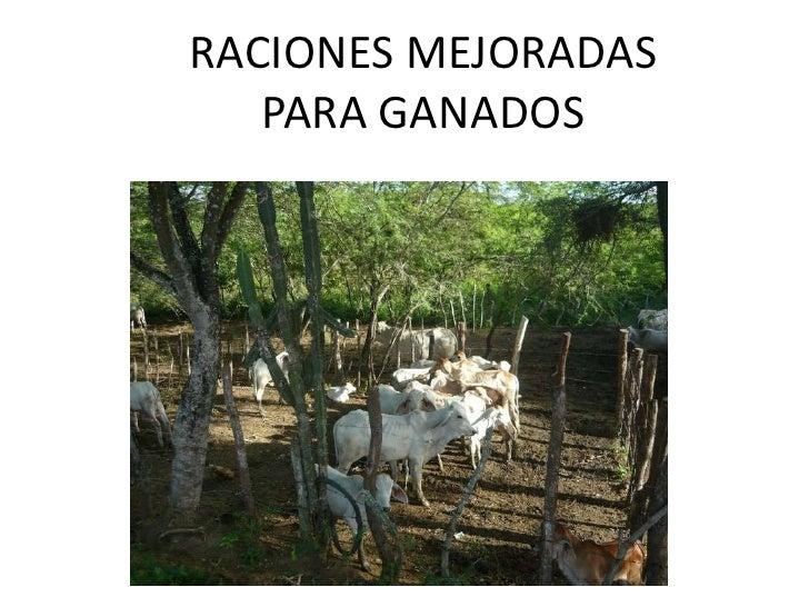 RACIONES MEJORADAS   PARA GANADOS