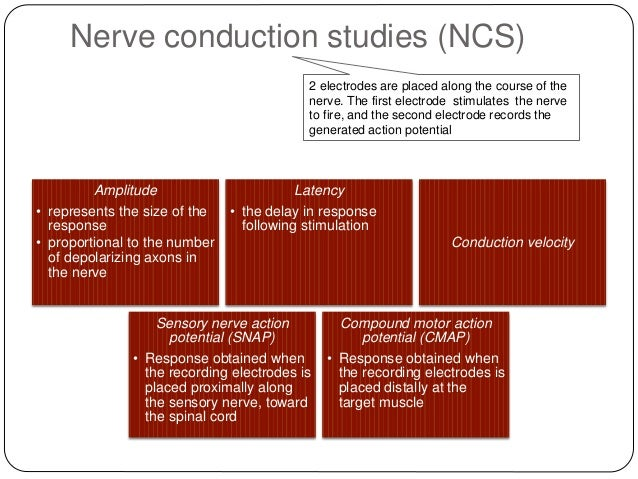 how does myelination affect nerve conduction velocity In all but a few cases, axonal conduction delays have  there does not appear to be a  s g determinants of conduction velocity in myelinated nerve.