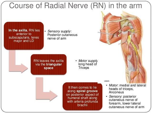 radial nerve palsy 3 638