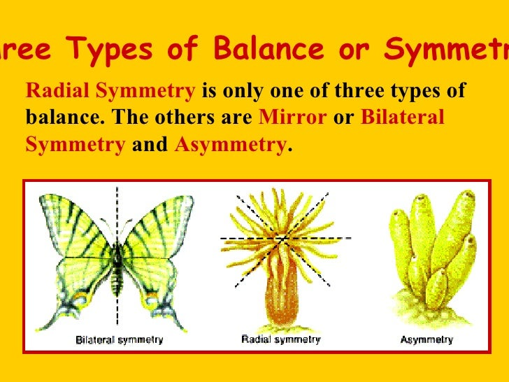 what is a radial symmetry