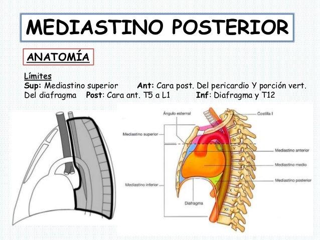mediastino-posterior-1-638.jpg?cb=1412648743