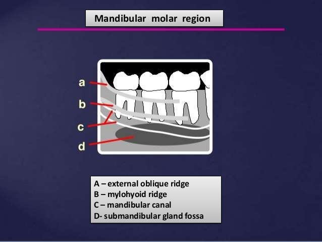 mandibular landmarks of radiograph