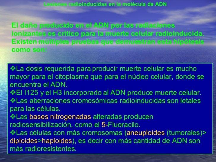 Lesiones radioinducidas en la molécula de ADN  El daño producido en el ADN por las radiaciones ionizantes es crítico para ...