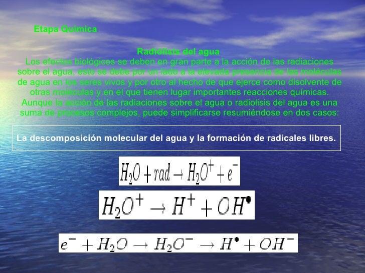 Etapa Química  Radiólisis del agua  Los efectos biológicos se deben en gran parte a la acción de las radiaciones sobre el ...