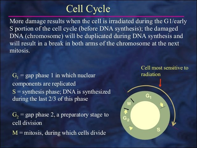 Radiosensitive Cells Cells that are more easily damaged by radiation are radiosensitive. The characteristics of radiosensi...