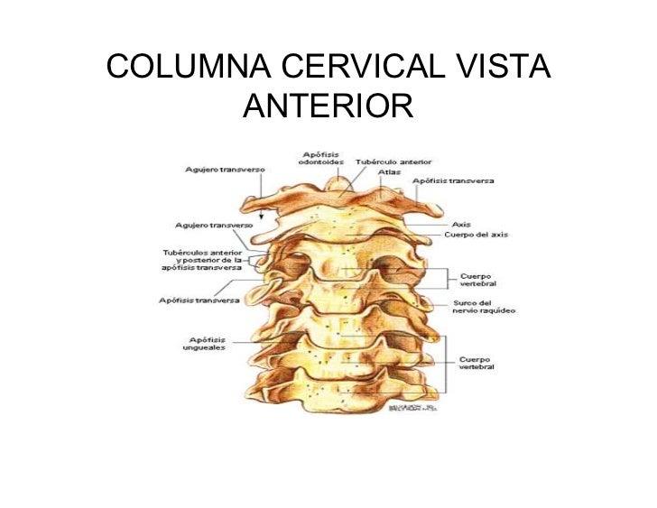 Bonito Columna Cervical Foto - Anatomía de Las Imágenesdel Cuerpo ...