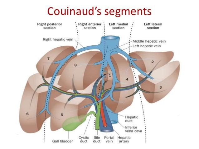 Radiological anatomy of hepatobiliary system