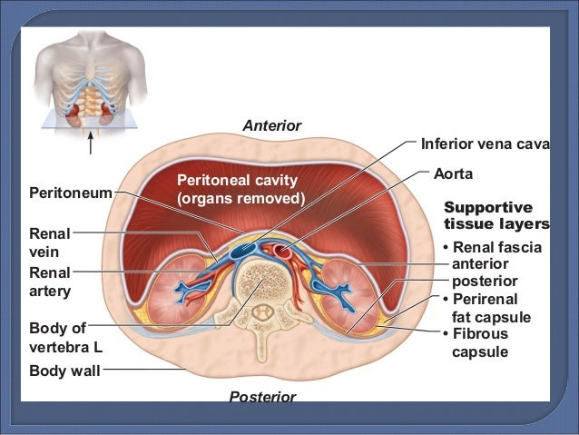 Paravertebral Gutter Anatomy Complications Of Thoracic