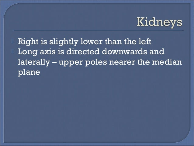 Radiological Anatomy Of Kidney Ureter Amp Bladder