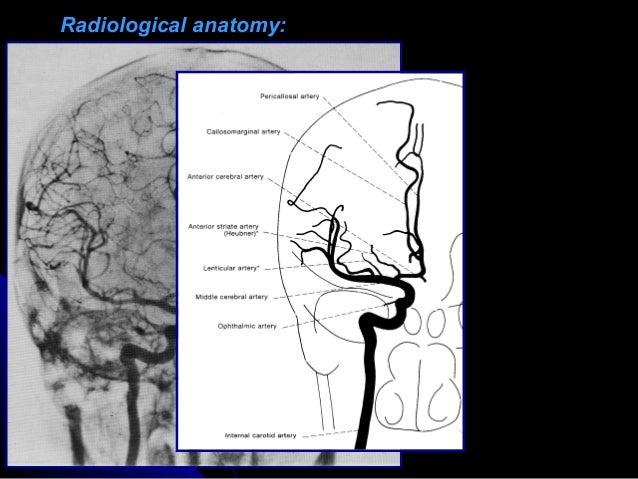Radiological anatomy of the brain