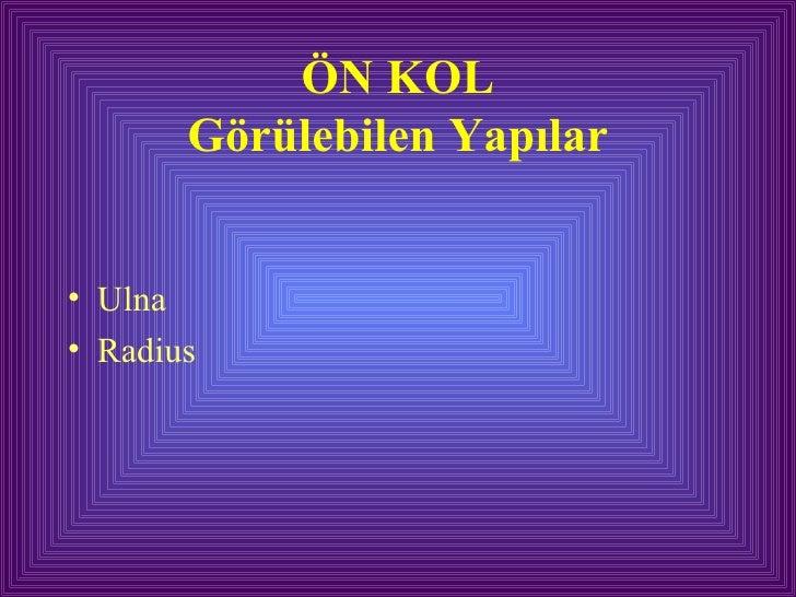 ÖN KOL Görülebilen Yapılar <ul><li>Ulna  </li></ul><ul><li>Radius </li></ul>