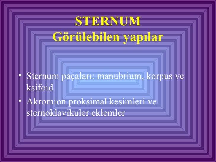 STERNUM Görülebilen yapılar <ul><li>Sternum paçaları: manubrium, korpus ve ksifoid </li></ul><ul><li>Akromion proksimal ke...