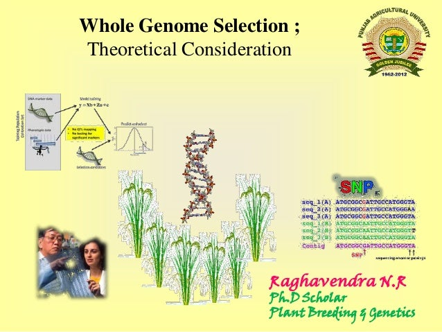 Whole Genome Selection ; Theoretical Consideration  Raghavendra N.R  Ph.D Scholar Plant Breeding & Genetics