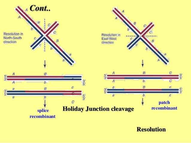 Homologous recombination hr holiday ccuart Images