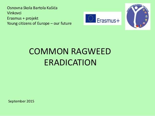 Ragweed Eradication