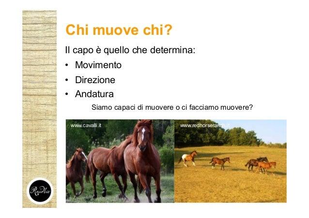 www.redhorseranch.itwww.cavalli.it Il capo è quello che determina: • Movimento • Direzione • Andatura Siamo capaci di muov...