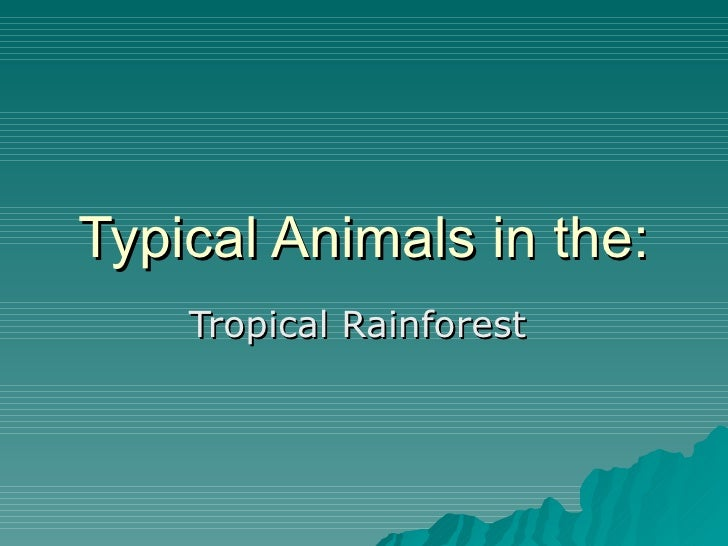 Typical Animals in the: Tropical Rainforest