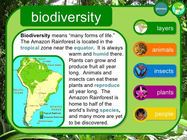 What Animals Live In The Tropical Rainforest