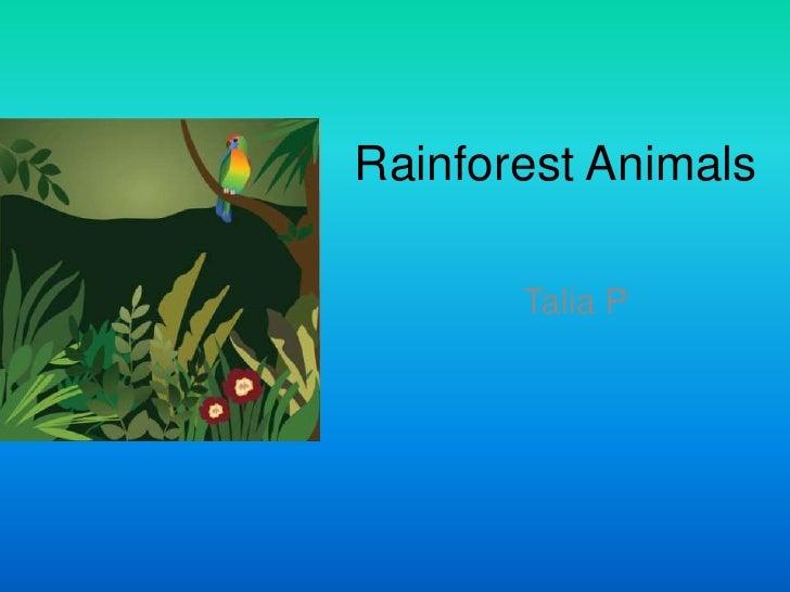 Rainforest Animals<br />Talia P<br />
