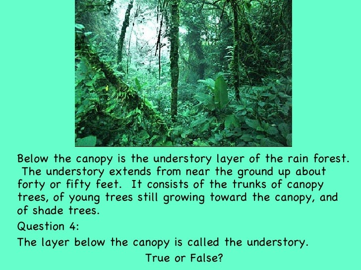 9 UlliBelow The Canopy Is Understory Layer