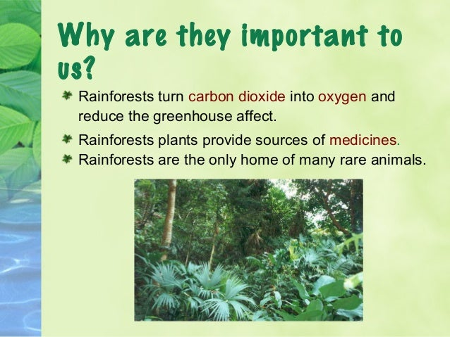 the importance of rain forests - the disappearing rainforests conserving the rainforest is a global issue of great importance tropical rainforests provide a habitat for animals, a unique ecosystem for vegetation, and an abundance of resources for humans, yet they are being destroyed at an astonishing rate.